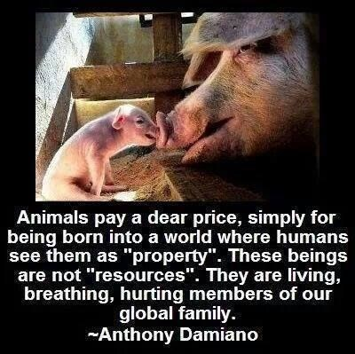 """Facial expression - Animals pay a dear price, simply for being born into a world where humans see them as """"property"""". These beings are not """"resources"""". They are living, breathing, hurting members of our global family Anthony Damiano"""