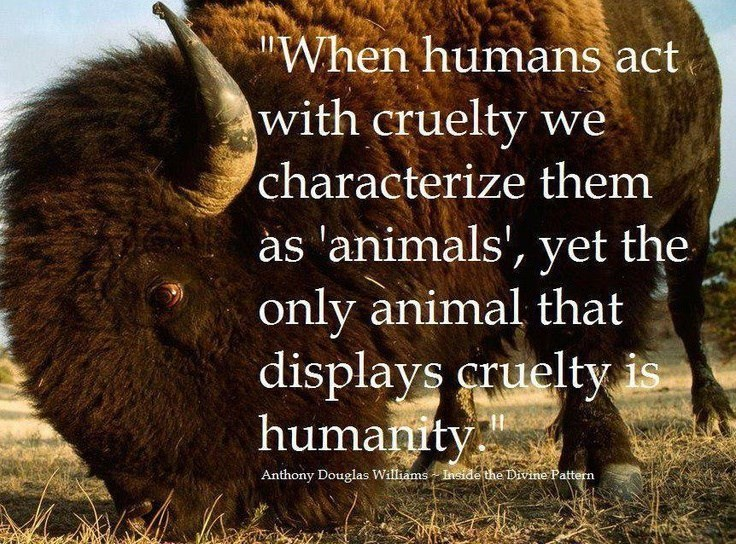 Terrestrial animal - When humans act with cruelty we characterize them as 'animals', yet the only animal that displays cruelty is humanity Anthony Douglas Williams Inside the Divine Pattern