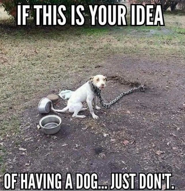 Dog - IF THIS IS YOUR IDEA OFHAVING A DOG JUST DONT