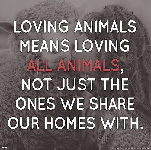 Font - LOVING ANIMALS MEANS LOVING ALL ANIMALS, NOT JUST THE ONES WE SHARE OUR HOMES WITH. PETA 38 Anne MeAthur/ Wa Anima