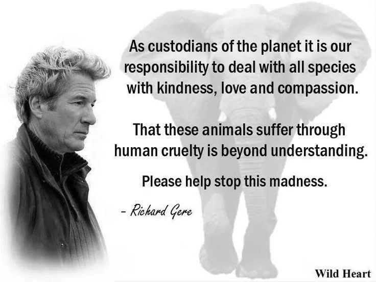Text - As custodians of the planet it is responsibility to deal with all species with kindness, love and compassion. That these animals suffer through human cruelty is beyond understanding. Please help stop this madness. - Richard Gere Wild Heart