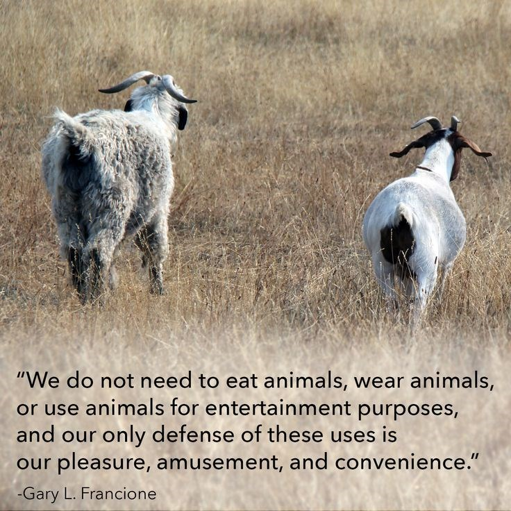 """Goats - """"We do not need to eat animals, wear animals, or use animals for entertainment purposes and our only defense of these uses is pleasure, amusement, and convenience."""" our -Gary L. Francione"""