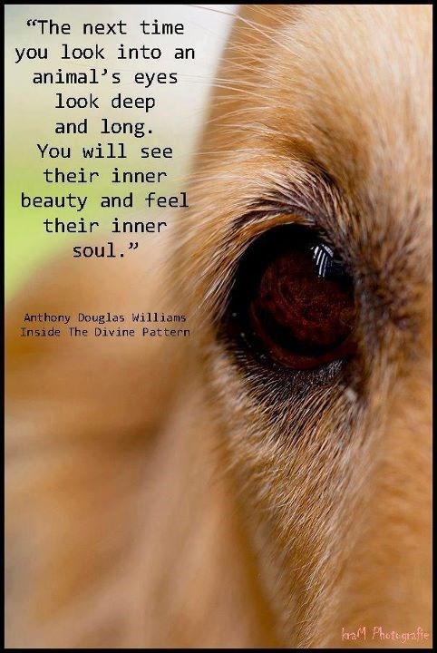 """Nose - """"The next time you look into an animal's eyes look deep and long You will see their inner beauty and feel their inner soul."""" Ant hony Douglas Williams Inside The Divine Pattern a Photegrafe"""
