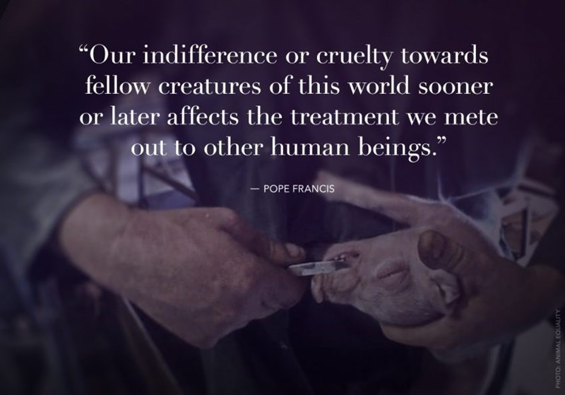 """Text - """"Our indifference or cruelty towards fellow creatures of this world sooner or later affects the treatment we mete out to other human beings."""" 22 - POPE FRANCIS AU TOWIN O1OHd"""