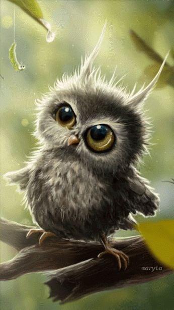 Owl - IryLa