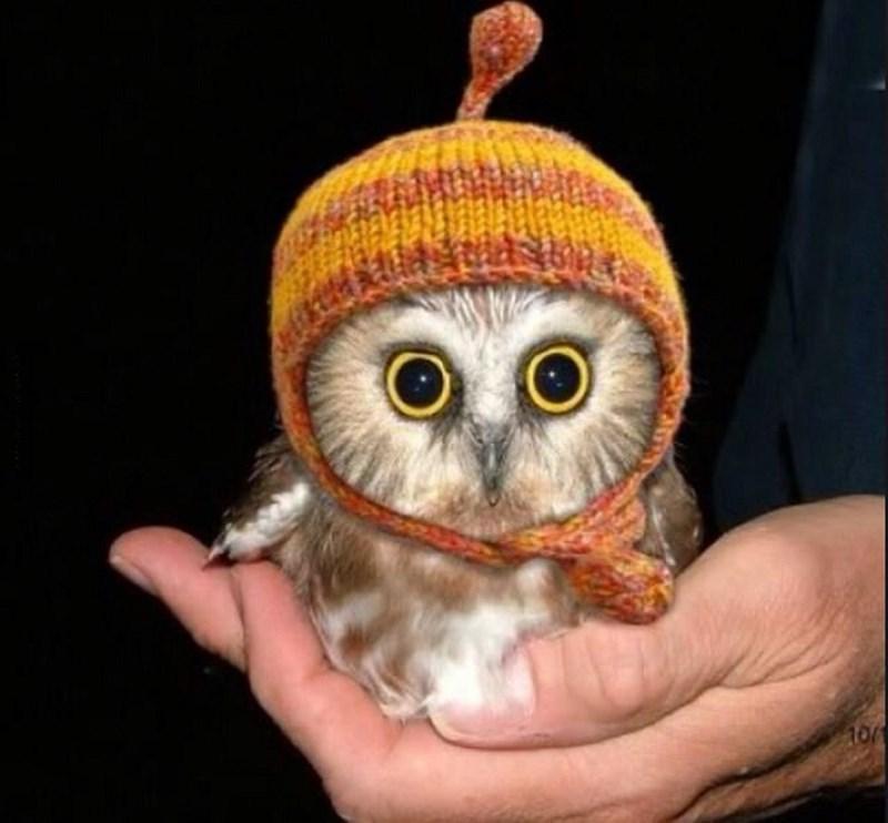 Owl - 100
