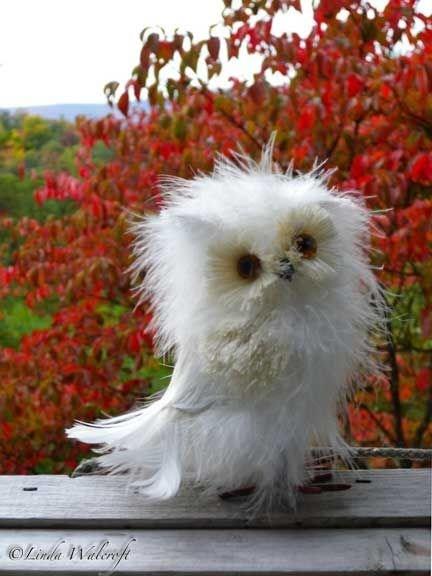 Bird - cli Walcefe