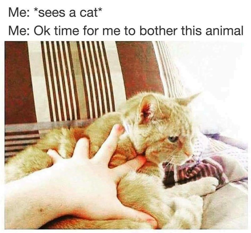 "Facial expression - Me: ""sees a cat* Me: Ok time for me to bother this animal"