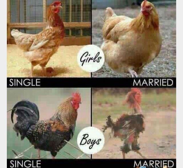 Chicken - Girls MARRIED SINGLE Beyc SINGLE MARRIED