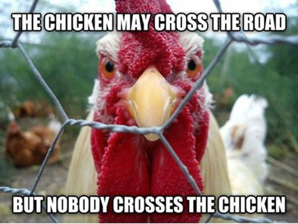 Bird - THE CHICKEN MAY CROSS THE ROAD BUT NOBODY CROSSES THE CHICKEN