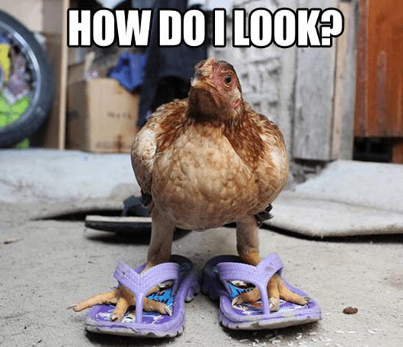 Bird - HOW DODLOOK? *1*