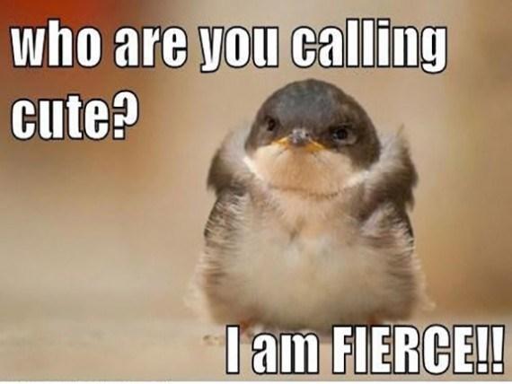Photo caption - who are you calling cute? Tam FIERCE!!
