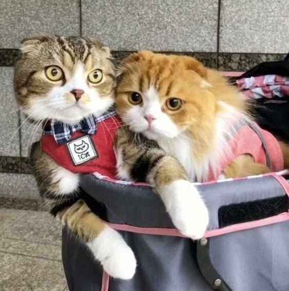 Cat - ICat
