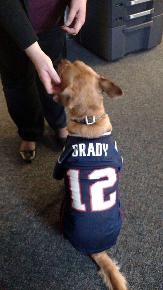 Dog breed - BRADY