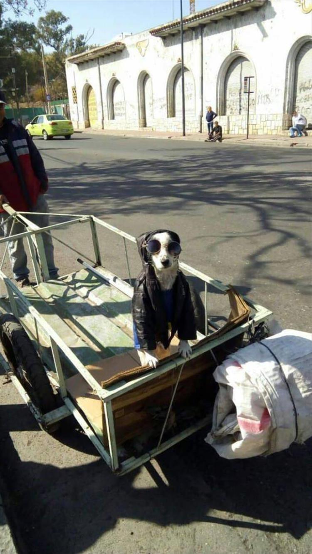 Dog - Cal