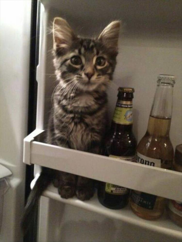 Cat - ronn