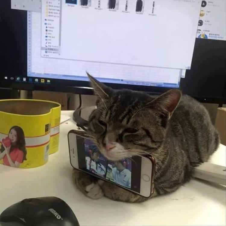 """Cat - FADKO """".."""