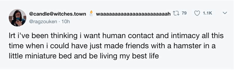 Text - 1.1K @candle@witches.town waaaaaaaaaaaaaaaaaaaaaaah tI 79 @ragzouken 10h Irt i've been thinking i want human contact and intimacy all this time when i could have just made friends with a hamster in a little miniature bed and be living my best life