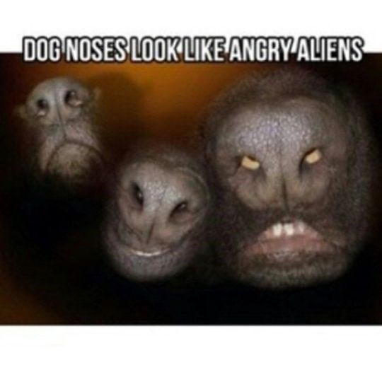 Funny friday animal meme about dog noses