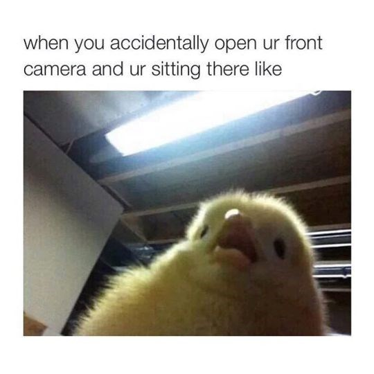 Funny friday animal meme about opening the front camera with pic of a baby chicken