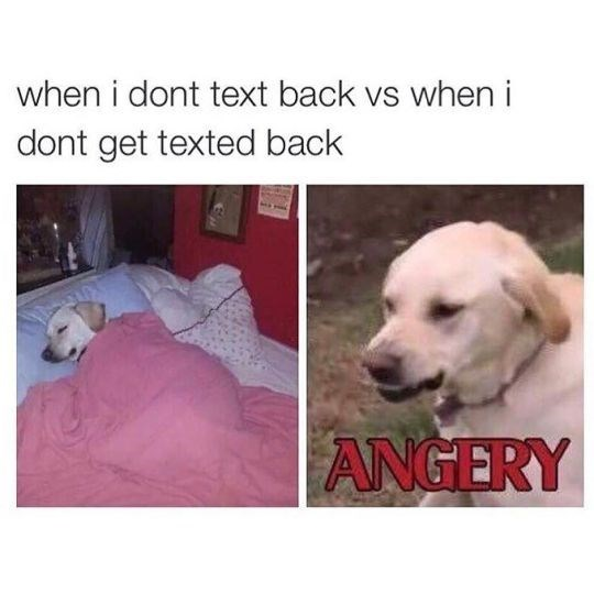 Funny friday animal meme about getting angry when you don't get a text back