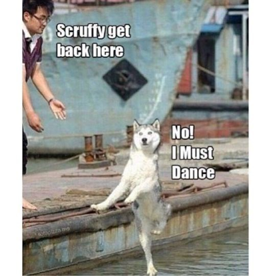 Funny friday animal meme of dog that looks like it's dancing