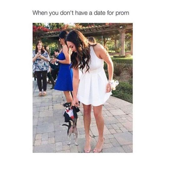 Funny friday animal meme about taking your dog to prom