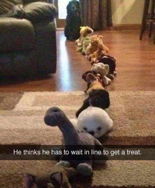 Funny friday animal meme of dog waiting in a line of stuffed toys