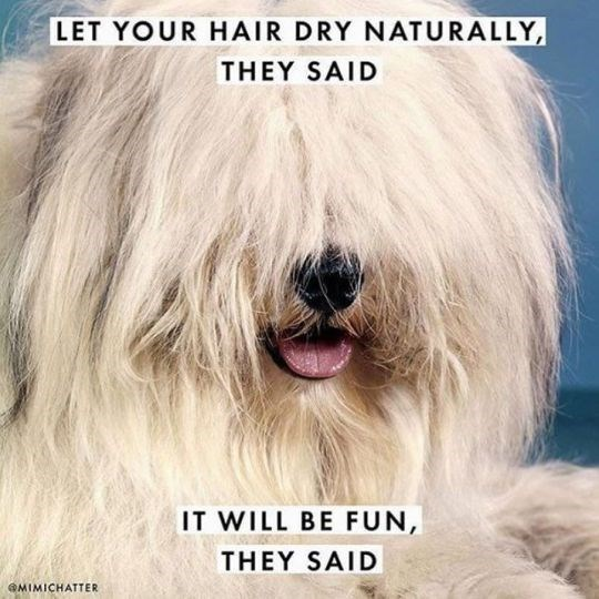 Funny friday animal meme about drying your hair naturally with pic of dog with wild fur