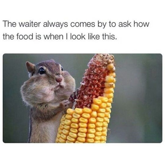 Funny friday animal meme about the waiter talking to you when your mouth is full