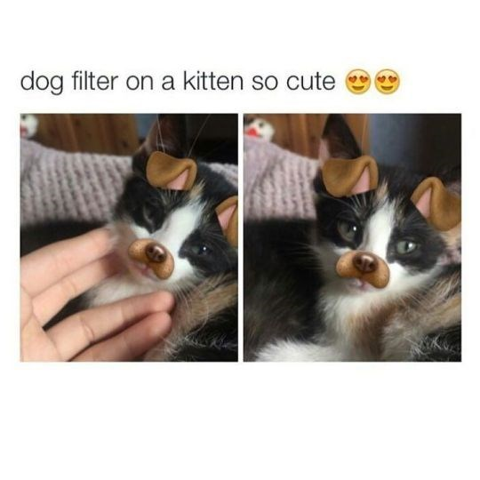 Funny friday animal meme with pics of a kitten with a dog filter