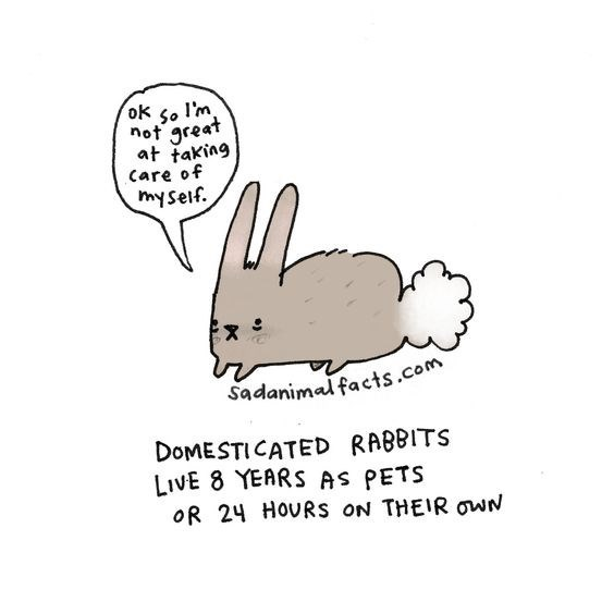 Cartoon - ok 5o I'm not great at taking Care of myseif. Sadanimal facts.com DOMESTICATED RABBITS LIVE 8 YEARS AS PETS oR 24 HOURS ON THEIR owN