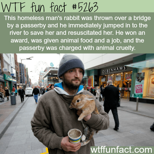 Organism - WTF fun fact #5263 This homeless man's rabbit was thrown over a bridge by a passerby and he immediately jumped in to the river to save her and resuscitated her. He won an award, was given animal food and a job, and the passerby was charged with animal cruelty. DEBENHAMΣ wtffunfact.com