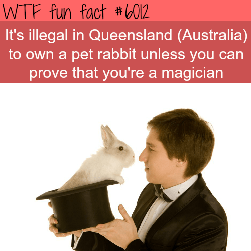 Photo caption - WTF fun fact #6012 It's illegal in Queensland (Australia to own a pet rabbit unless you can prove that you're a magician