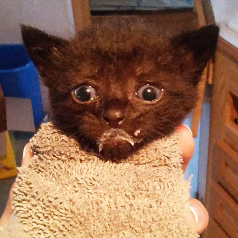 kitten milk mustache - Cat