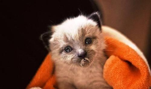 kitten milk mustache - Mammal