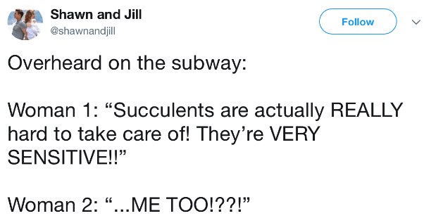 "Text - Shawn and Jill Follow @shawnandjill Overheard on the subway: Woman 1: ""Succulents are actually REALLY hard to take care of! They're VERY SENSITIVE!!"" Woman 2: ""...ME TOO!??!"""