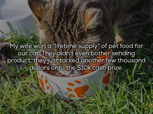 Wife that won lifetime supply of cat food and they just gave money instead