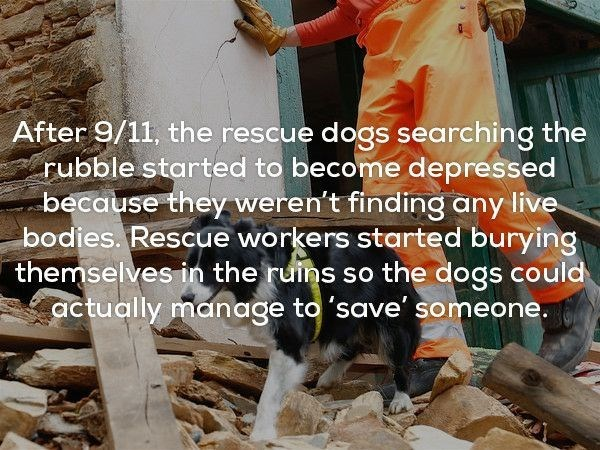 Text - After 9/11, the rescue dogs searching the rubble started to become depressed because they weren't finding any live bodies. Rescue workers started burying themselves in the ruins so the dogs could actually manage to 'save' someone.