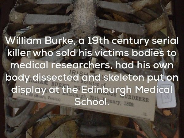 Text - William Burke, a 19th century serial killer who sold his victims bodies to medical researchers, had his own IRISH body dissected and skeleton put on SEeleton display at the Edinburgh Medical inourgh, 23t BURKT RURDERER Mears Tertius) School., 1829 11