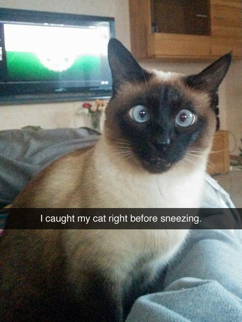 caturday meme of a cat seconds before sneezing