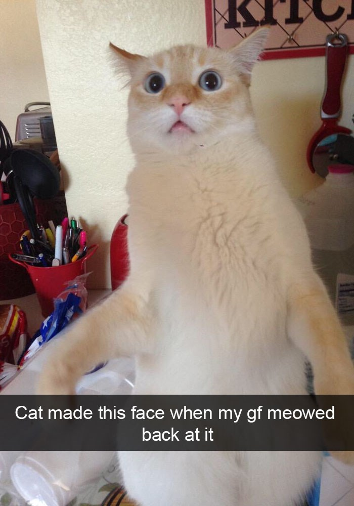 caturday meme of cat surprised when human meows at it