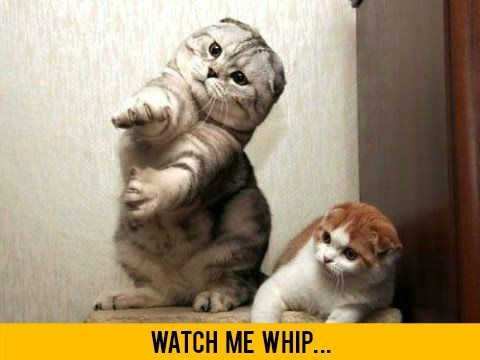 caturday meme of a cat doing the nae nae