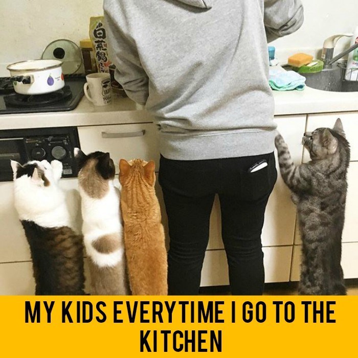 caturday meme about cats following owner to the kitchen