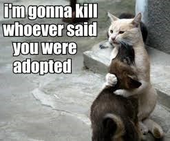 caturday meme of a cat and its adopted dog