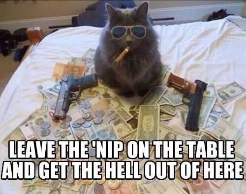 caturday meme of a gangster cat