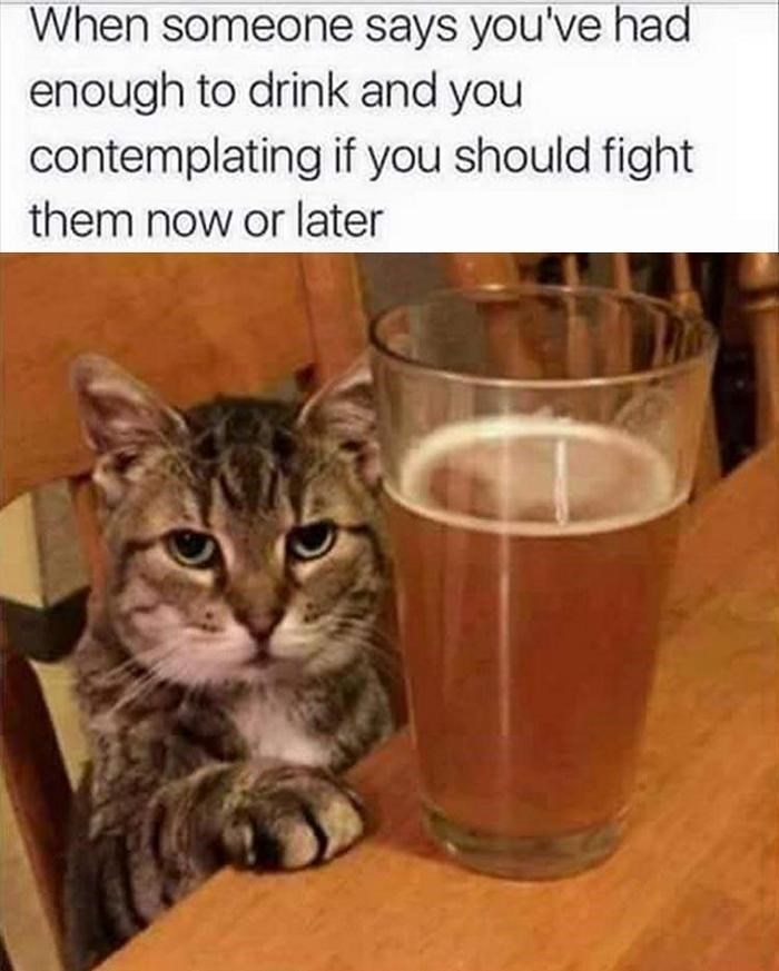 caturday meme about being told you drink too much