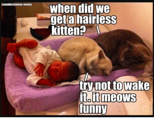 caturday meme of cats sleeping next to a human baby