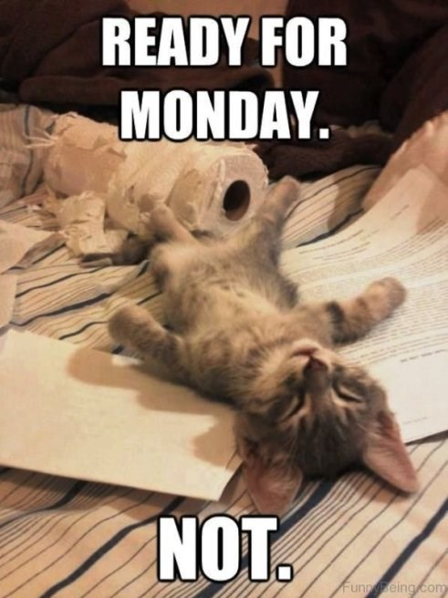 caturday meme about monday with a sleepy kitten