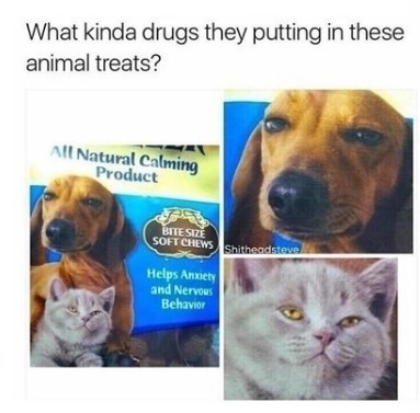 caturday meme of pet food with pics of high cats and dogs on the package